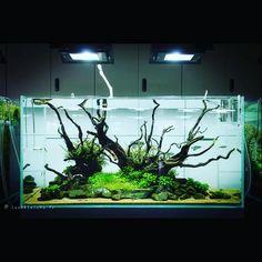 """222 Gostos, 2 Comentários - AquarioGeek (@aquariogeek) no Instagram: """"#aquascape #aquascaping #plants #hardscape"""""""