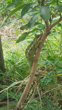 Natura in Madagascar