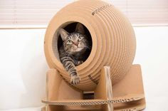 Spherical cardboard toys for cats Crazy Cat Lady, Crazy Cats, Cardboard Toys, Beautiful Cats, Cat Toys, Dog Cat, Cute Animals, Blue Train, Cat Stuff