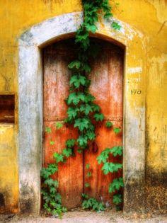 An overgrown door in Panaji, Goa, India. Door to the world. When One Door Closes, Relax, Closed Doors, Doorway, Door Knobs, Stairways, Windows And Doors, Color Inspiration, Goa India