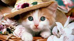 Oi eu sou gatinha e mesmo no friozinho vale lembrar que existem flores para os dias frios embelezar o seu jardim..
