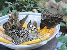 Butterfly house - Google Search