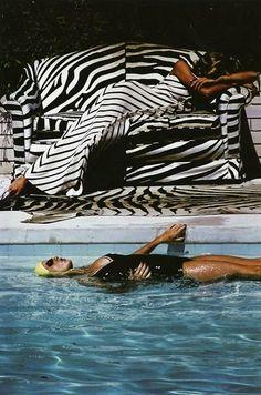 Zebra Chic | I Herd You Inspiration