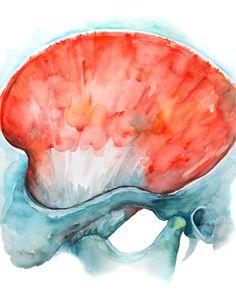 Lámina acuarela temporalis pintura de anatomía Dental por LyonRoad