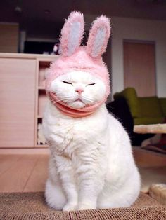 Very interesting post: TOP 52 Funny Cats and Kittens Pics.сom lot of interesting things on Funny Animals, Funny Cat. I Love Cats, Crazy Cats, Cute Cats, Funny Cats, Baby Animals, Funny Animals, Cute Animals, Animals Images, Old Cats