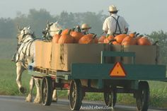 Amish-Horse-Drawn-Wagon... I have a deep, deep respect for the Amish and for many of their ways.