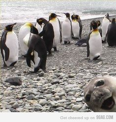 This just makes me laugh out loud....way to photo bomb.