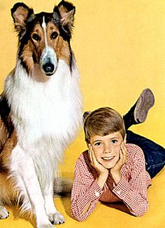 Lassie and Timmy. Rough Collie, Collie Dog, Sweet Memories, Childhood Memories, Jon Provost, Eminem, Childhood Tv Shows, Metallica, Old Shows