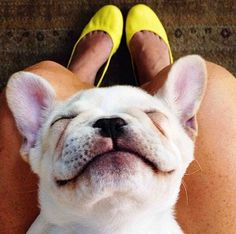 yellow flats and a dogs smile.