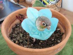 pet bird costume - Flower power