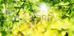 foresta: spring forest - fresh leaves and sun rays