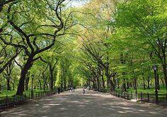 Image source: Central Park Conservancy