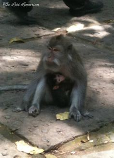 At the Sacred Monkey Forest in Ubud, Bali.