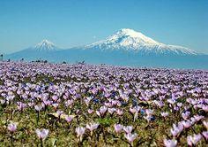 Armenia, and Mount Ararat in occupied Armenia http://www.gotravel.am/en/incoming