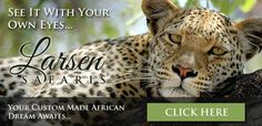 Africam | A LIVE 24x7 Interactive African Wildlife Safari - Always LIVE and always wild, Africam brings you live video feeds from the African bush with audio and night vision. Watch wild African animals in their natural habitat including lions, elephants, giraffes and leopards. Africam.com a leading producer of African wildlife content including live streaming cameras, videos, photos, blogs and wildlife news articles.