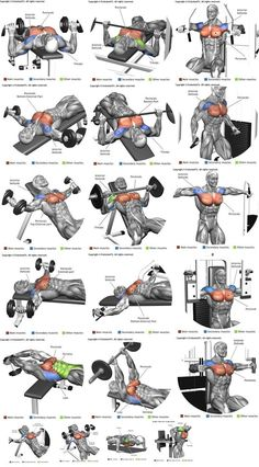 Chest muscle is one of the muscle loved by bodybuilders and fitness practitioners. How to train them directly affects their shape. So I will give you the most basic exercises and how to apply them to get a strong and beautiful chest muscle at the same time. #weightlifting