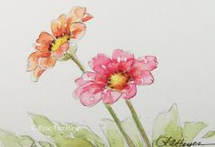 Original Watercolor Painting Zinnias Flowers by RoseAnnHayes