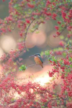 Beautiful bird in spring