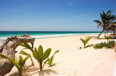 Vacation Home Rental, Tulum, Mexico, Mayan Riviera Cozumel, Cancun, Tulum, Mayan History, Vacation Home Rentals, Mexico Travel, Merida, Snorkeling, Travel Around