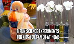 8 Fun Science Experiments For Kids You Can Do At Home