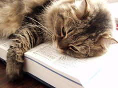 Coco_dictionary by Shes on Falla, via Flickr