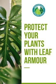 The Unique Product To Help Shine And Protect Your Plant Leafs From Fungus, Bacteria, And Insects. Accessible Now To Purchase. Snap To Learn More About Leaf Armor. Vertical Garden Design, Herb Garden Design, Garden Design Plans, Landscaping With Rocks, Landscaping Plants, Organic Supplies, Garden Quotes, Garden Planning, Indoor Plants