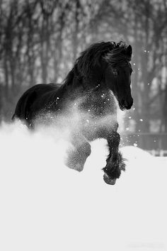 Black horse in the snow.Love horses and this is so awesome! Horses In Snow, Black Horses, Wild Horses, Dark Horse, Black Stallion Horse, Brown Horse, All The Pretty Horses, Beautiful Horses, Animals Beautiful