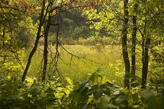 Green's Creek, to the east of Ottawa, is an area of unusual geology with steep-sided ravines and plateaux. There are several short ski and hiking tr...
