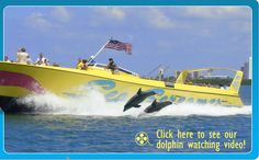 Dolphin watching boat tours $24 per adult $18 children 5yo free   (sit in the back and get wet- but you do see dolphins in the wake..)