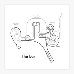 Ear Letterpress Print by Archie's Press