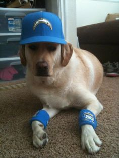 A very calm Chargers fan. #ChargersPetDay