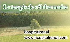¿Cuál Es el Mayor Tratamiento para el Paciente con Nivel de Creatinina 2.7 y la Función Renal 22%?