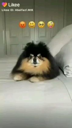 Cute Baby Videos, Some Funny Videos, Funny Videos For Kids, Cute Couple Videos, Cute Fluffy Dogs, Bts Dogs, Foto Jimin Bts, Photoshoot Bts, Blackpink Funny