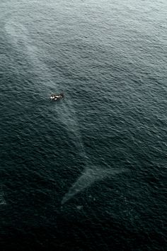 vistale:  You're never alone in the ocean.