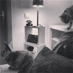 um sonho, ter um gato e um coelho. o gato eu tenho...falta o coelho    foto: http://instagram.com/miausara/