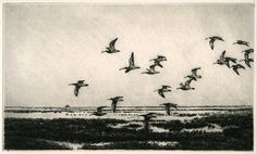 Curlew In Flight, Original Etching, Limited Edition, 6 1/2 x 11 inches, Framed, black frame