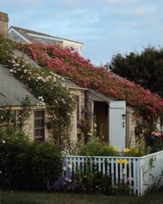 Beach cottage with roses