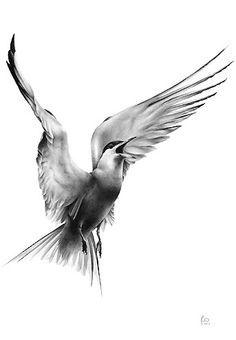 arctic tern tattoo - Google Search