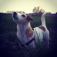 Dog Fluit in Limburgse heuvels