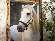 www.horsealot.com, the equestrian social network for riders & horse lovers | Equestrian Photography : Andréa Kjellberg.