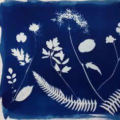 cyanotype #diy #prints #cyanotype #blueprint #blue #tutorial @theyourejemaakt