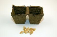 Homemade Peat Pots
