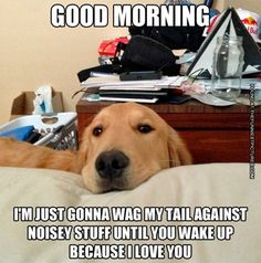 good-morning-dog.jpg (600×607)