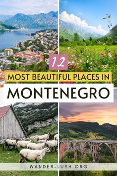 UNESCO Old Towns, white-sand beaches, river canyons, mountain peaks, and the largest lake in the Balkans – the tiny nation of Montenegro has it all. Plan the perfect road trip itinerary with this list of the 12 most beautiful places in Montenegro. #Montenegro #Balkans #Europe | Where to go in Montenegro | Things to do in Montenegro #Kotor #Budva #SkadarLake #Durmitor | Balkans travel guide Europe Destinations, Places In Europe, Europe Travel Guide, Best Places To Travel, Cool Places To Visit, Travel Guides, Traveling Europe, Backpacking Europe, Budget Travel