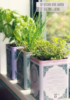 Hello Petal: DIY kitchen Herb Garden tins- Now I have a reason to buy and drink WAY more Harney's! Herb Garden In Kitchen, Kitchen Herbs, Diy Kitchen, Herbs Garden, Kitchen Window Sill, Tea Tins, Flower Tea, Growing Herbs, Hacks