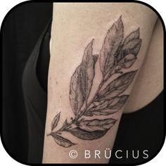 BRÜCIUS