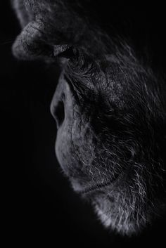 Most beautiful animals photography...somehow he almost seems human. So much emotion.