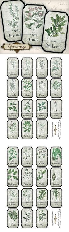 Printable Shabby Herbal Labels by VectoriaDesigns.deviantart.com on @deviantART | herbology, herbalism, healing plants, herbal medicine: