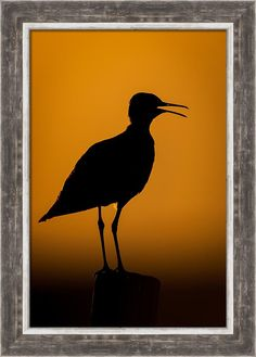 Nature Print featuring the photograph Sandpiper Silhouette by Jeff Phillippi