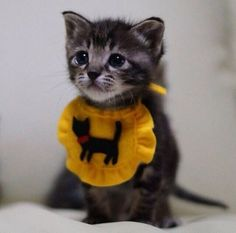 Kitten with Bib, Cats Just Want to Have Fun, Sweet Kittens, Playful Kittens, Cute Cats Pretty Cats, Beautiful Cats, Animals Beautiful, Cute Baby Animals, Animals And Pets, Funny Animals, Funny Cats, Cute Kittens, Cute Little Kittens
